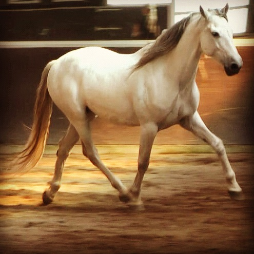 Tranter horse Кожухотрубный испаритель WTK SCE 43 Чита