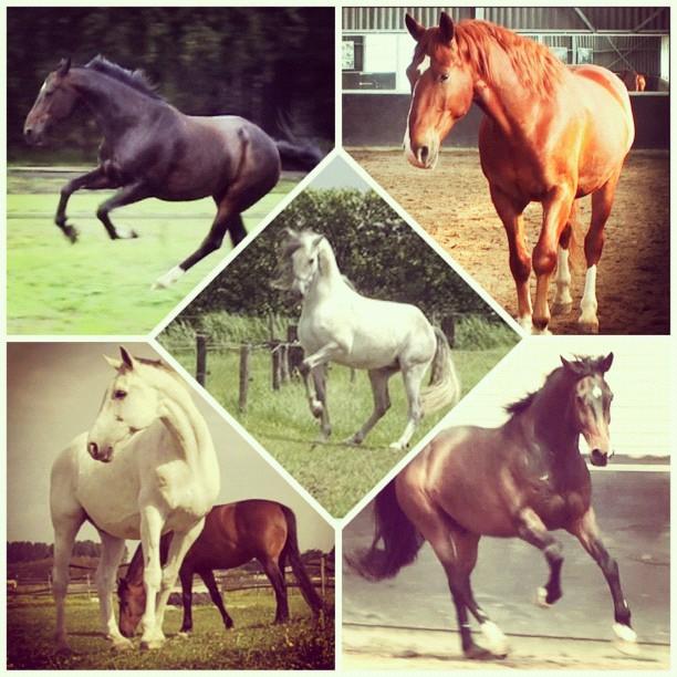 Horse characteristics