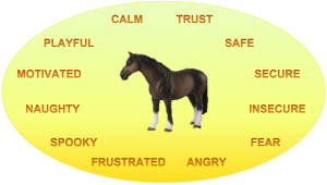 Horse's emotions