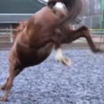 problem horse