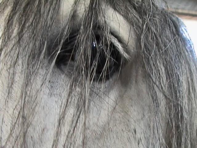 Authentic spirit of the horse