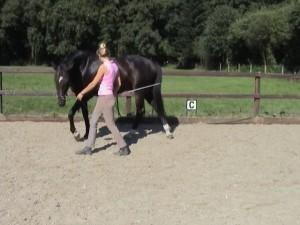 Bending horse