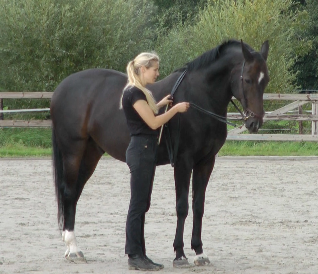 Clicker Training - Free Spirit Horse Training |Horse Training
