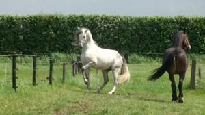 Horse body