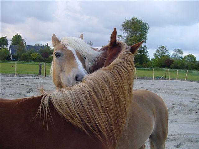 Horse<br<br /><br /><br /><br /><br /><br /><br /> /> language