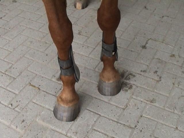 Horse leg protectors