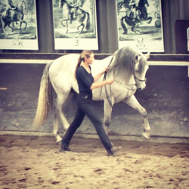 High, medium, low spirited horses